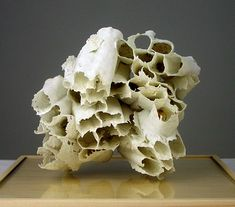This looks particularly barnacle-y to me. It's gauze, dipped and fired. I just love how paper thin these look. I could never have these in my home – someone would break them immediately.
