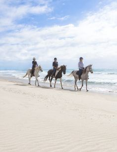 Imagine the wind in your face, the sun on your skin and just the sound of the surf and hoof beats on the white sand…this is yours at Pakiri Beach!  Pakiri Beach Horse Rides is just 90 minutes from downtown #Auckland city, less than 2 hours from Auckland International Airport and just minutes from Matakana Coast Wine Country.  Ride the trails of our ancestors. Visit the ancient Pa site of a paramount #Maori chief, high above the Pacific Ocean.