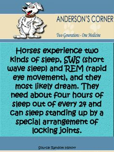 Horse Fact