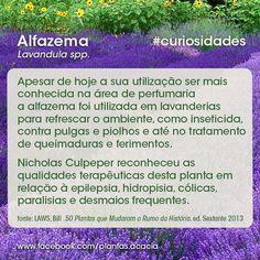Você sabia que #Alfazema tinha tantas propriedades e usos? #plantas #curiosidades #jardinagem