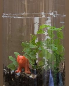 Create a mini plant habitat with your kid to help teach him what it takes to make an ecosystem work. Terrarium homeschool science.