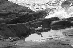 #aigrette #eau #chassier #long bec #noir et blanc #oiseau #oiseau blanc #oiseau sauvage #plumage #plus anim