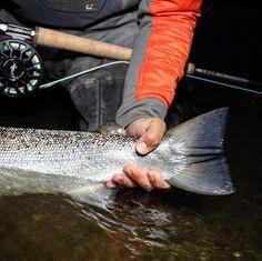 Hold it tight and keep em wet .... @keepemwetfishing  @abelreels #fishingmakesyouhappy #fliegenfischen #catchandrelease #itonlycountsonthefly #flytying #aosfishing #fishing #fischen #flyfishing #fluefiske #fluefiskeri #perhokalastus #vliegvissen #tightlines #pescaconmosca #pechemouche #graz #austria #angeln #keepemwet #keepemwetfishing #keepfishwet #flyfishingaddict #SEEWHATSOUTTHERE @orvisuk @aosfishing @orvisflyfishing @loop_tackle @simmsfishing @guidelineflyfish @rioproducts @skinnywatercultu Graz Austria, Fly Tying, Fly Fishing, Fishing, Camping Tips, Fishing Lures