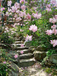 stone steps | brookline ma