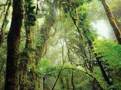 http://file1.npage.de/002610/16/bilder/fotoalbum-costa-rica-regenwald.jpeg