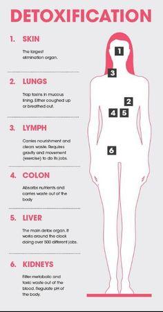 How the body detoxifies.