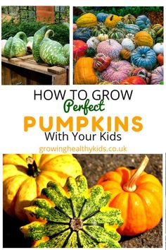 Growing Vegetables How To Grow Pumpkins with kids, gardening help, grow your own advice - Growing Pumpkins. Pumpkins are a big part of our growing experience. Halloween wouldn't be the same without them. Organic Vegetables, Growing Vegetables, Gardening Vegetables, Growing Plants, Pumpkin Garden, Diy Garden Projects, Garden Ideas, Fun Projects, Garden Tools