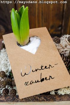 DIY Frühlingsdeko mit Hyazinthenzwiebeln und Plotterfreebie für Zwiebelblumen-Anhänger #diy #doityourself #plotter #frühling #hyazinthen #dekoration Island Moos, Tin Candles, House Plants, Place Card Holders, Jar, Blog, Lettering, Natural Colors, Onion
