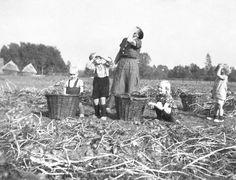 Sept. 1944 - honderden Engelse jachtbommenwerpers boven aardappelveld Geurink in Lichtenvoorde