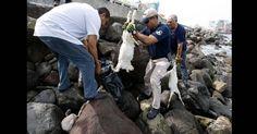 Decapitaron 5 cabras para rituales satánicos. Encuentren a estos psícopatas! FIRMA Y COMPARTE...