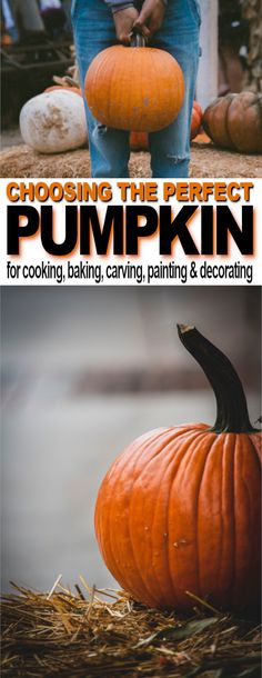 Tips For Choosing the Perfect Pumpkin | The Ultimate Pinterest Party Week 316