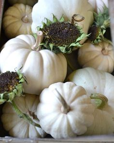 White pumpkins and dried sunflowers as seen in the new Autumn edition of Somerset Life magazine