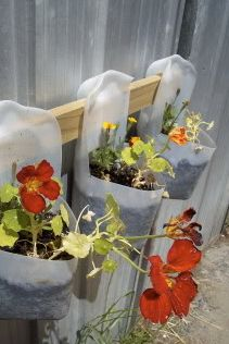 upcycle a gallon of milk - would be awesome spray painted with metallic paint -- with different herbs in each