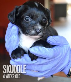 41 Best Puppy Litter Images Cubs Whelping Puppies Doggies