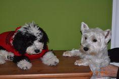 Pichu y Drako
