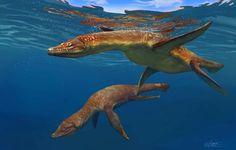 Marine Reptiles: Rhomaleosaurus by on DeviantArt Reptiles, Mammals, Prehistoric Creatures, Prehistoric Wildlife, Spinosaurus, Jurassic Park World, Dinosaur Art, Extinct Animals, Jurassic Park