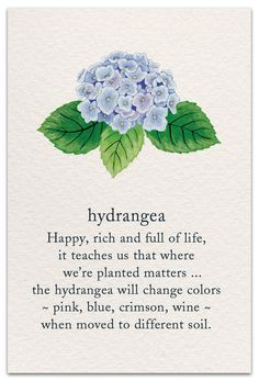flower quotes Inside Message: May this be a beautiful move for you. Hortensia Hydrangea, Hydrangeas, Sogetsu Ikebana, Flower Meanings, Symbols And Meanings, Spiritual Symbols, Language Of Flowers, Meaning Of Life, Book Of Shadows