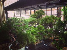 morning Bonsai, Japanese, Plants, Japanese Language, Plant, Planets, String Garden