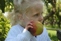 Local Apple Picking Farms for Families