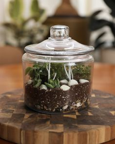 DIY Glow Terrarium Your traditional terrarium has gotten a glow up.