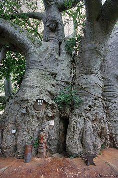 Kelly Haston - Árbol Baobab en Sunland Granja, Provincia de Limpopo, Sudáfrica