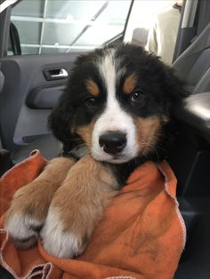 Cute Funny Animals, Cute Baby Animals, Animals And Pets, Cute Baby Dogs, Cute Dogs And Puppies, Dog Pictures, Animal Pictures, Raining Cats And Dogs, My Animal