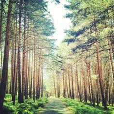 Valsain, Segovia Comebacks, Pine, To Go, Places, Nature, Photography, Travel, Farmhouse, You Are Awesome