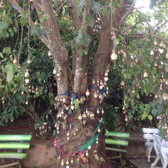Prayer Bells on the Bhoda Tree in Phuket, Thailand