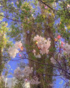 aesthetic cherry blossoms in San Francisco 🌸 spring sakura Angel Aesthetic, Nature Aesthetic, Flower Aesthetic, Aesthetic Images, Aesthetic Backgrounds, Aesthetic Iphone Wallpaper, Aesthetic Vintage, Aesthetic Photo, Aesthetic Wallpapers