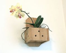 Wall Planter Hanging Wood Plant Box Orchid Pot Wooden Hanger Mounted Fern Air Plant Rustic Decor Planting Container Cat Proof Child Safe