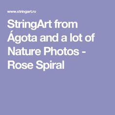 StringArt from Ágota and a lot of Nature Photos - Rose Spiral