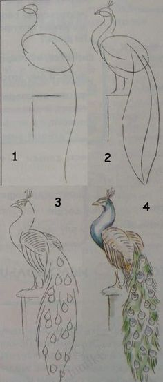 d8e08fbdf Painting for kids / Luntiks. Crafts and art activities, games for kids.  Children drawing and coloring pages. Drawing an easy peacock.
