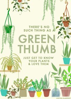 """There's no such thing as green thumb just get to know your plants & love them"" - Justina Blakeney"