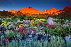 "Galen Rowell (1940-2002), ""Summer Dawn beneath Mount Humphreys ~ Eastern Sierra, California, USA"""