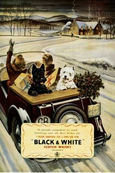 @Kellene Fleischmann you and Kevin need a print of this! Black and White Scotty Dogs Christmas Scotch ad.