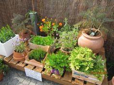 BYLINKY NETRADIČNE :)   Hurá do záhrady
