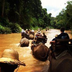 Chiang Dao elephant trek. Top Travel Photos of 2012: http://travelblog.viator.com/the-year-in-photos-top-10-traveler-photos-on-viator/