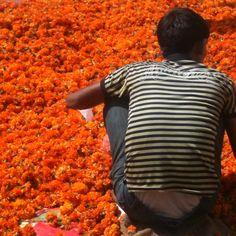 Hyderabad festival #Hyderabad #India #websynergies