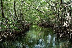 Toutes les tailles | Mangroves in Senegal Sine Saloum | Flickr: partage de photos!