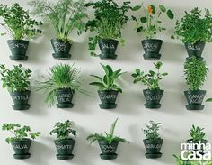 Hortelã, alecrim, salsa, coentro... Aprenda aqui como cultivar essas espécies para ter temperos fresquinhos em casa