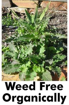Weed free organically: preparation, pre-emergent and post-emergent methods