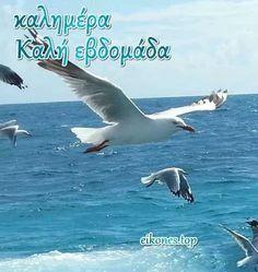 WEEK Καλημέρα Καλή Εβδομάδα - Good morning Have a nice week Greek Language, Beautiful Images, Good Morning, Funny, Animals, Gardening, Photos, Good Day, Animales