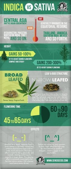 See what the differences are between Indica and Sativa.
