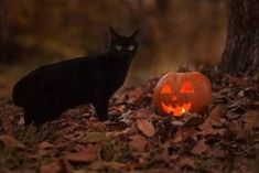 Black Cat And Jack O Lantern halloween halloween pictures halloween images jack o lantern black cat halloween photos images of halloween Halloween Look, Samhain Halloween, Halloween Pictures, Holidays Halloween, Vintage Halloween, Halloween Pumpkins, Happy Halloween, Halloween Season, Season Of The Witch
