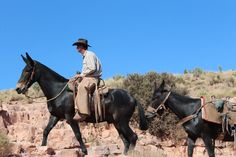 Grand Canyon mule rides offer a unique way to see the Grand Canyon. Mules are surefooted on the Grand Canyon terrain. Work With Animals, Cute Animals, Grand Canyon Mule Ride, Draft Mule, Mules Animal, Cowboy Images, Horses And Dogs, Trail Riding, Mountain Man