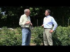 Blueberry care tips video.  I need some tips for my new blueberry bush I just planted.