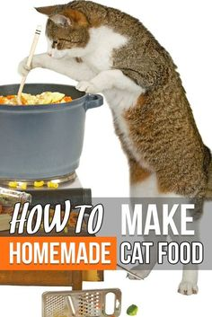 How to make homemade cat food http://www.traveling-cats.com