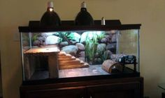 Flawless 70+ Best Ideas Bearded Dragon Habitat https://meowlogy.com/2017/03/29/70-best-ideas-bearded-dragon-habitat/ If your plan is to house Bearded Dragons together, utilize a bigger cage to lower the potential for aggression and monitor your dragons closely. Bearded Dragons are decidedly one of the the optimal/optimally pet lizards it's possible to own. They are usually sociable creatures...