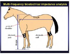 Equine Raindrop Therapy 101 | Equine Wellness Magazine