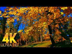 Золотая Сказка Красивая Осень Пение Птиц для Релаксации Отдыха Хорошего настроения в 4K Ultra HD - YouTube Relaxing Room, Relaxation Room, Youtube